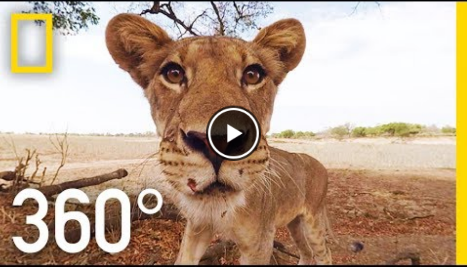 National Geographic - Video 360